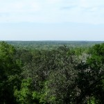 Treetop View
