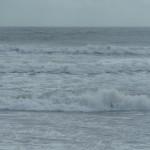Sassy Surf