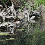 Waterlogged Turtles