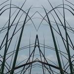 Mirrored Grass 2