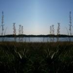 Mirrored Marsh