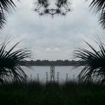 Mirrored Marsh 4
